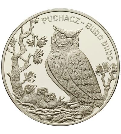20 złotych 2005 - Puchacz