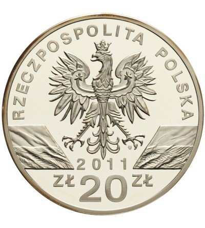 20 złotych 2011, borsuk
