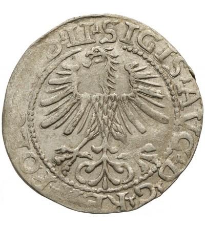 Polgrosz (1/2 Grosza) 1564, Vilnius Mint