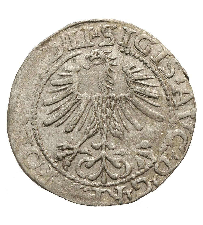 Półgrosz 1564, Wilno