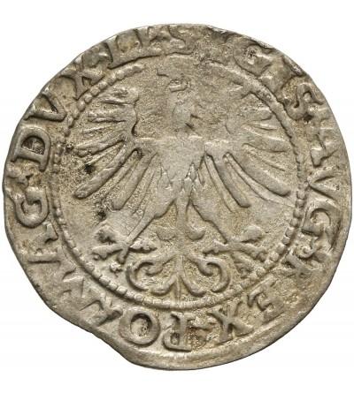Polgrosz (1/2 Grosza) 1563, Vilnius Mint