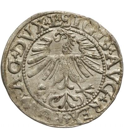 Półgrosz 1562, Wilno