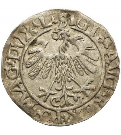 Półgrosz 1559, Wilno