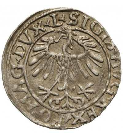 Półgrosz 1556, Wilno