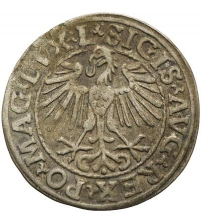 Półgrosz 1548, Wilno