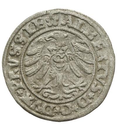Prusy Książęce. Szeląg 1530 Królewiec