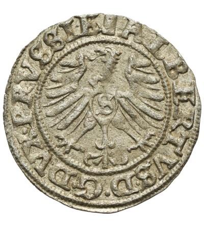 Prusy Książęce. Szeląg 1557 Królewiec