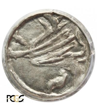 Śląsk. Świdnica halerz bez daty, ok 1430, PCGS MS 62