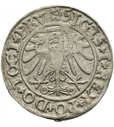 Grosz 1534, Elbląg