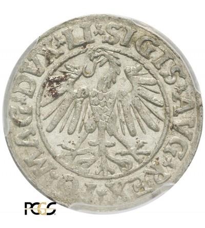 Polgrosz (1/2 Grosza) 1547, Vilnius Mint - PCGS MS 62