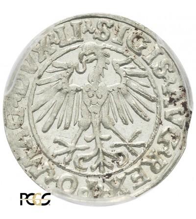 Poland/Lithuania. Polgrosz (1/2 Grosza) 1548, Vilnius Mint - PCGS MS 62