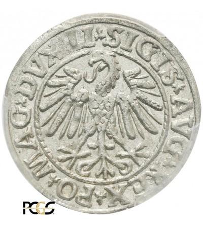 Półgrosz (1/2 grosza) 1547, Wilno - PCGS MS 63
