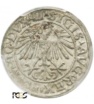 Półgrosz (1/2 grosza) 1548, Wilno - PCGS MS 63
