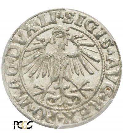 Półgrosz (1/2 grosza) 1550, Wilno - PCGS MS 64