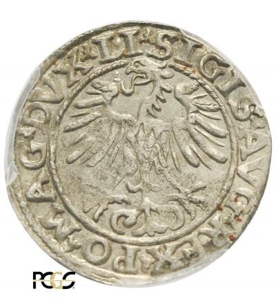 Półgrosz (1/2 grosza) 1553, Wilno - PCGS MS 62