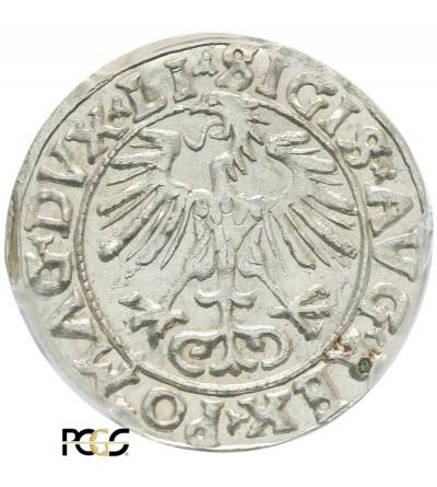 Półgrosz (1/2 grosza) 1556, Wilno - PCGS MS 63