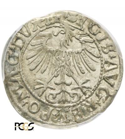 Polgrosz (1/2 Grosza) 1557, Vilnius Mint - PCGS MS 63