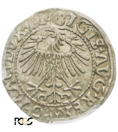 Półgrosz (1/2 grosza) 1557, Wilno - PCGS MS 62