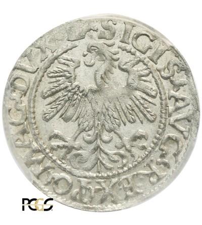 Półgrosz (1/2 grosza) 1559, Wilno - PCGS MS 63