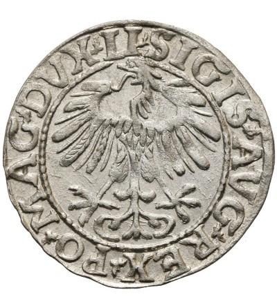 Polgrosz (1/2 Grosza) 1557, Vilnius Mint