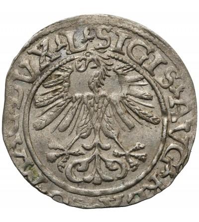 Polgrosz (1/2 Grosza) 1561, Vilnius Mint