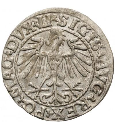 Półgrosz (1/2 grosza) 1548, Wilno