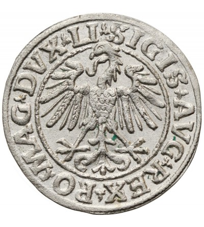 Polgrosz (1/2 Grosza) 1547, Vilnius Mint